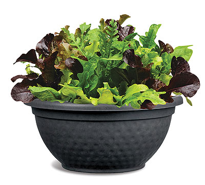 salad planter bowl