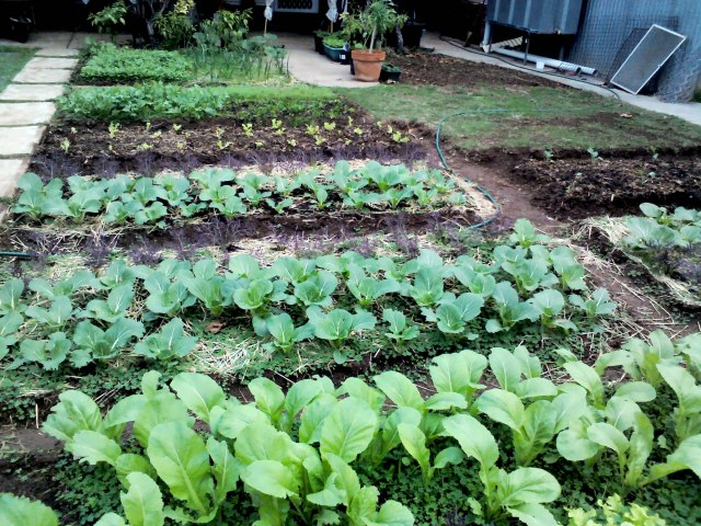 2 - rapid plots of winter greens
