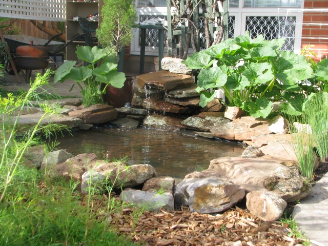 8 - the pond before water plants