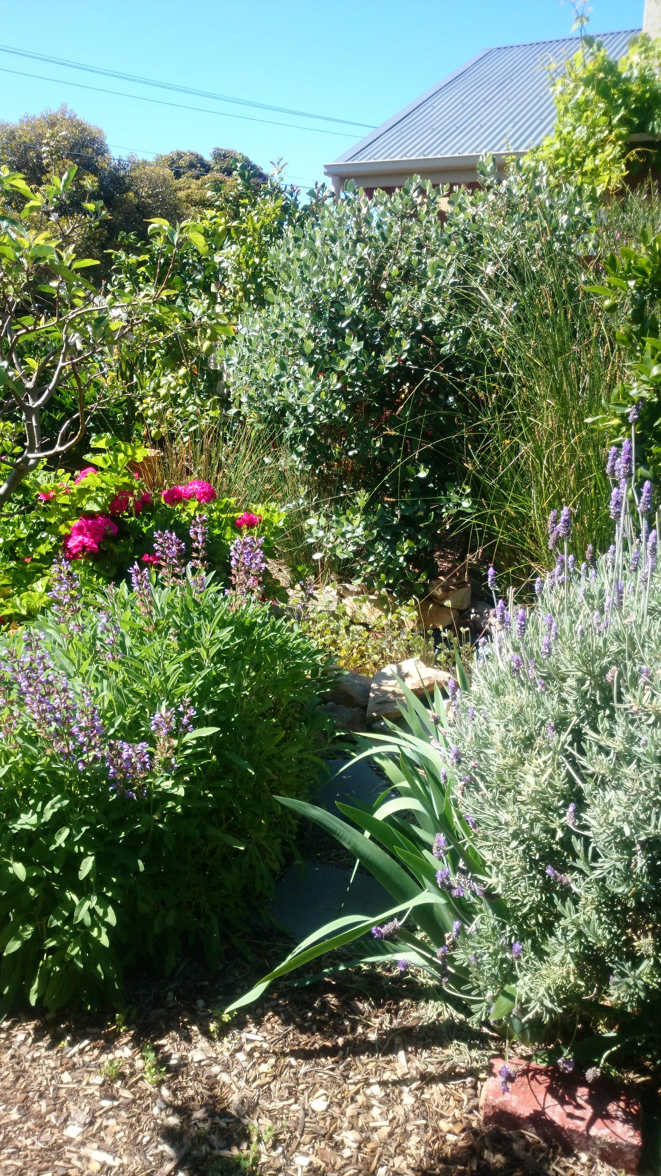 Nadjas Garden Permaculture garden design Adelaide