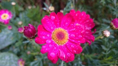 Cupcake daisy