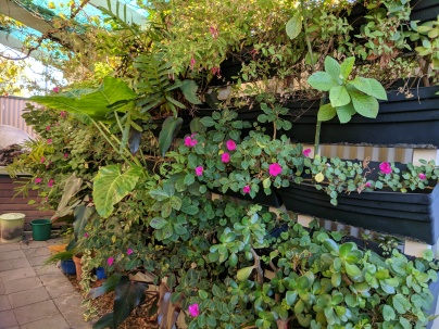 Impatiens, ferns etc in vertical garden